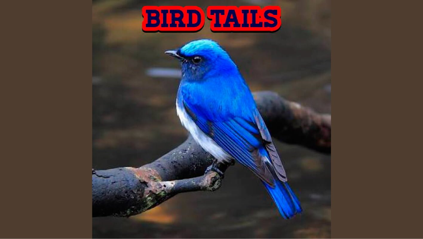 BIRD TAILS